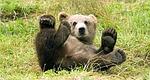熊 ハーキュリーズ